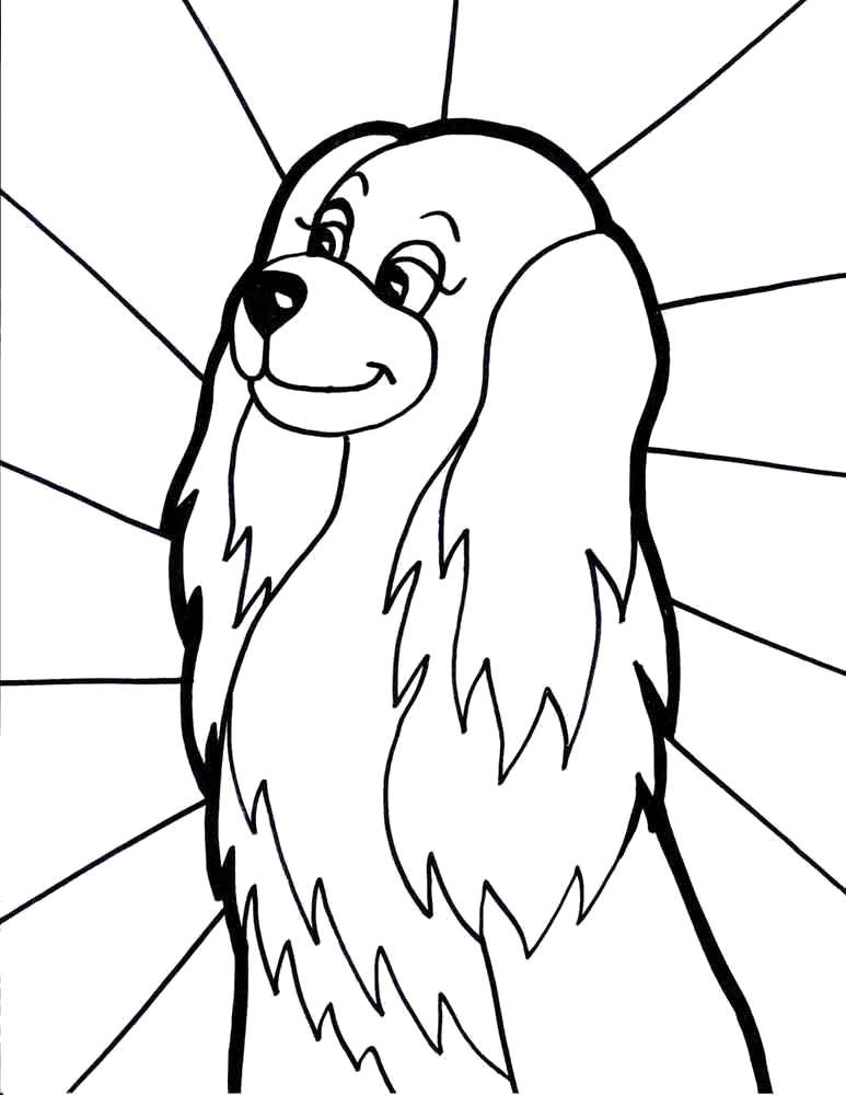 Раскраска Ушастая собака. Скачать Собака.  Распечатать Домашние животные