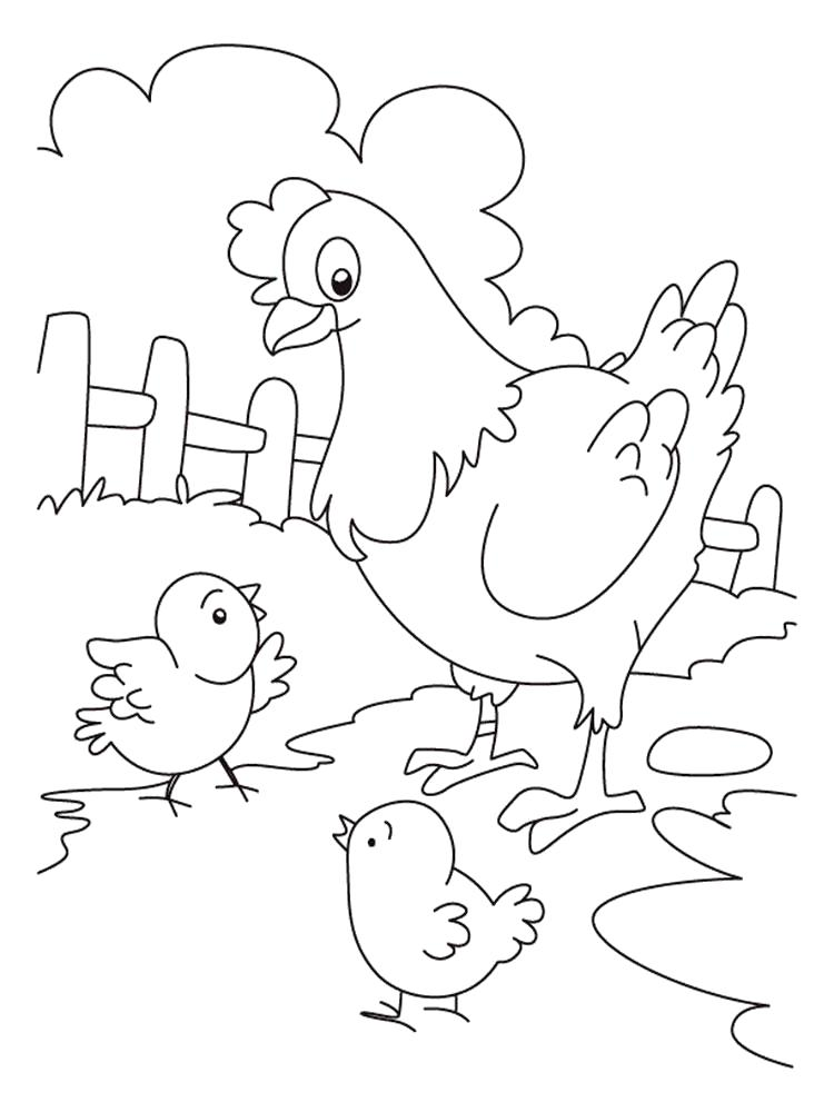 Раскраска  курица. Скачать Петух, Цыплята.  Распечатать Домашние животные