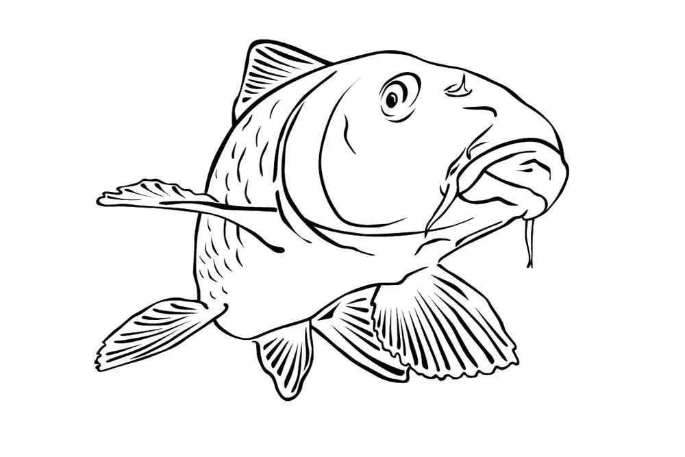 Раскраска  рыбки для малышей. Скачать карп.  Распечатать карп