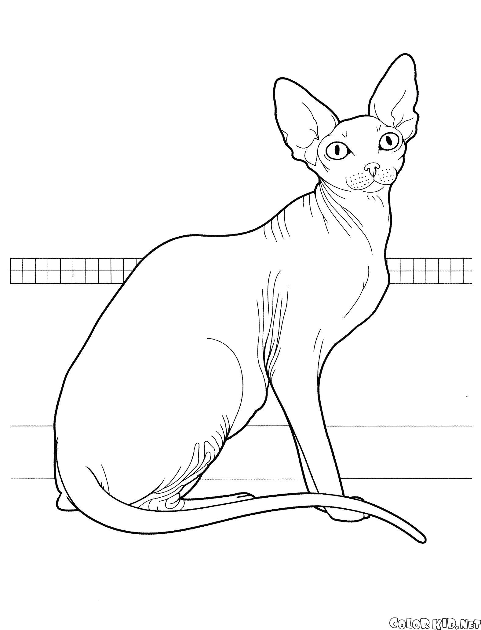 Раскраска Канадский сфинкс. Скачать кошка.  Распечатать кошка