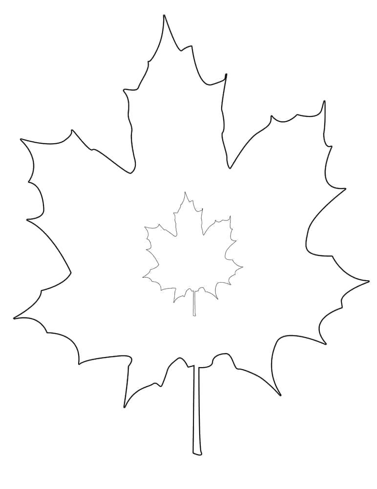 Раскраска Кленовые листья. Скачать лист.  Распечатать растения
