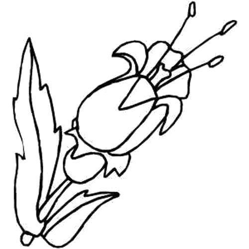 Раскраска  Три тычинки. Скачать Цветы.  Распечатать Цветы