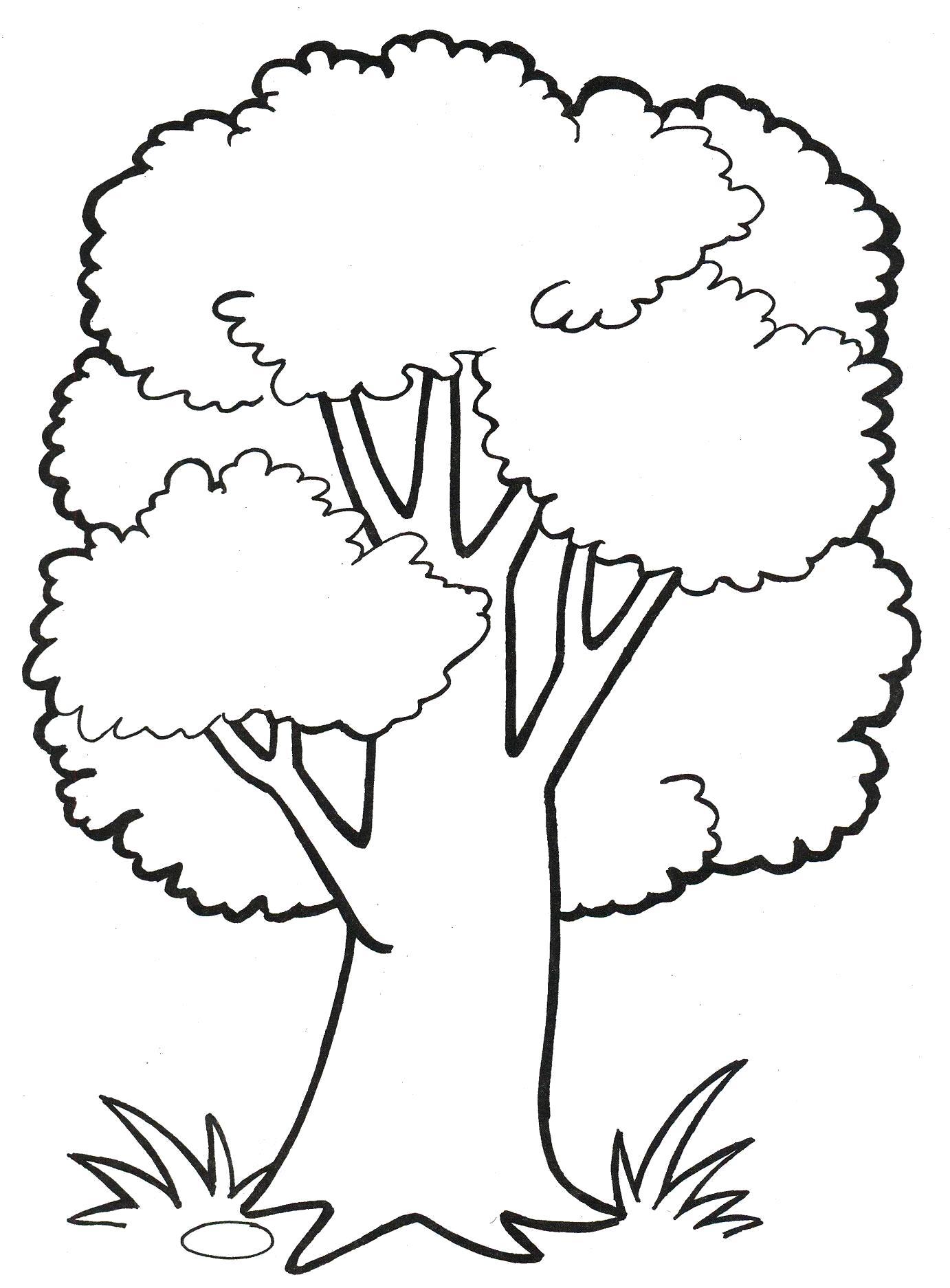 Раскраска  пышное дерево, дерево большое. Скачать деревья.  Распечатать деревья