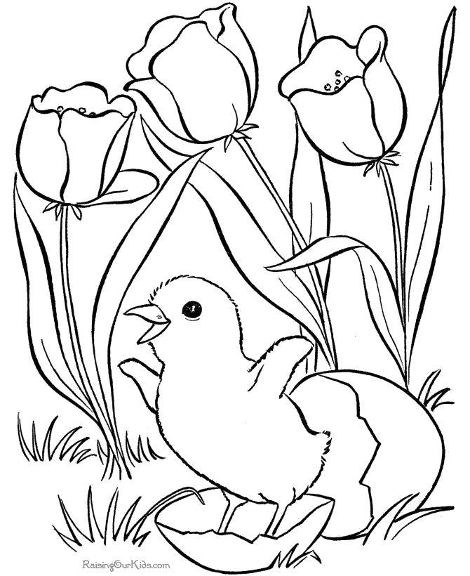Раскраска птинец вылупился с яйца. птичка радуется весне, . Скачать Весна.  Распечатать Весна