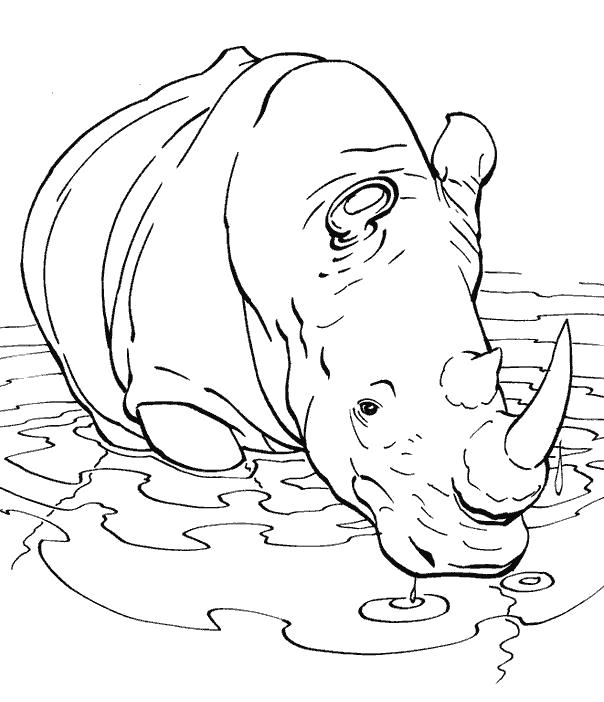 Раскраска носорог купается. Скачать Носорог.  Распечатать Дикие животные