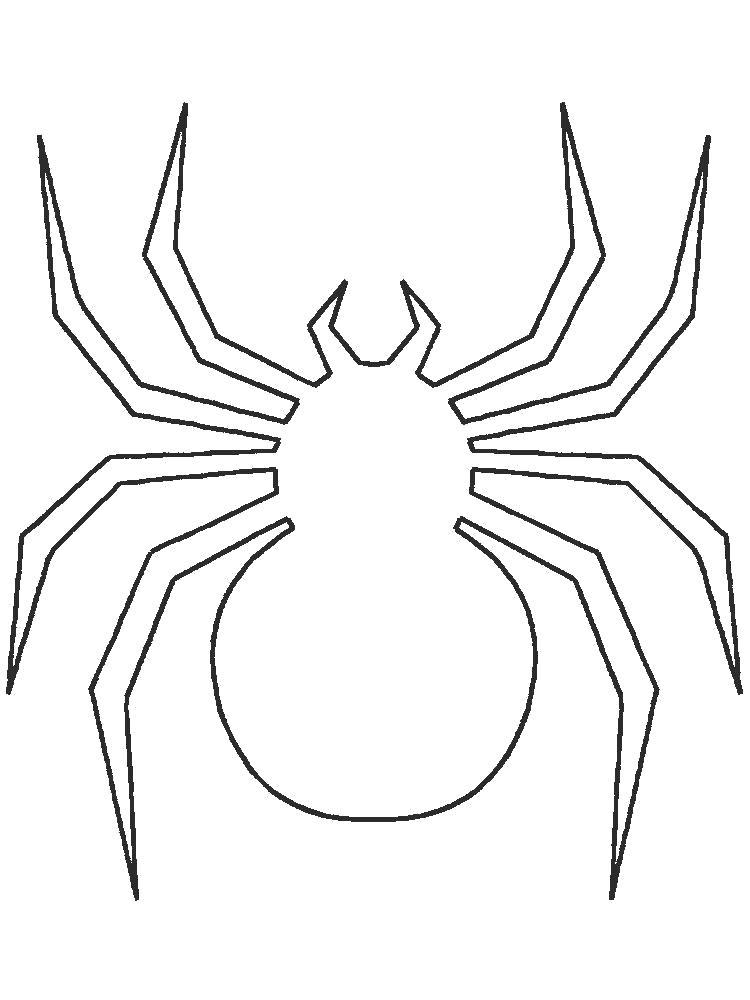 Раскраска  паук. Контур паука. Скачать Паук.  Распечатать Паук