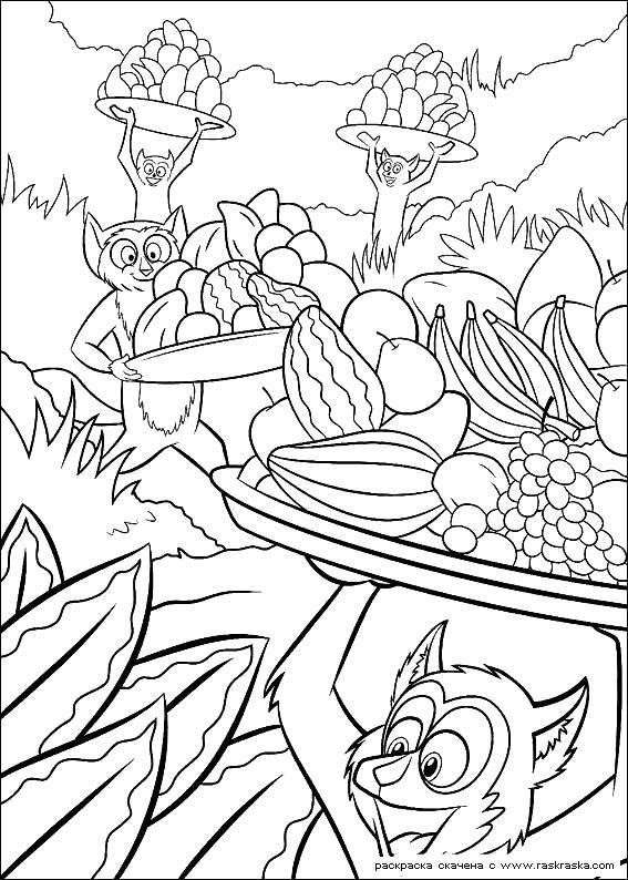 Раскраска  Лемуры.  Разукрашка для детей из мультика Мадагаскар, кадры, картинки из мультика. Скачать Мадагаскар.  Распечатать Мадагаскар