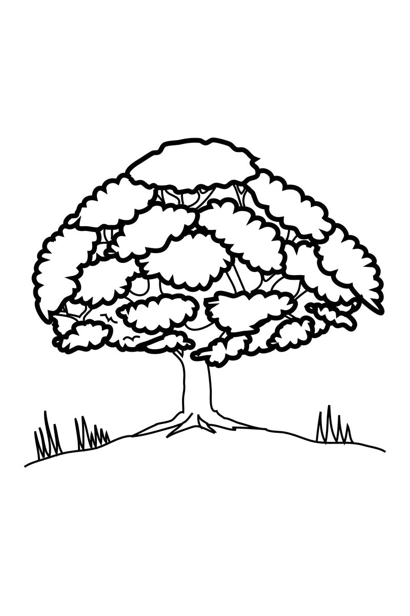 Раскраска  пышное дерево. Скачать деревья.  Распечатать деревья