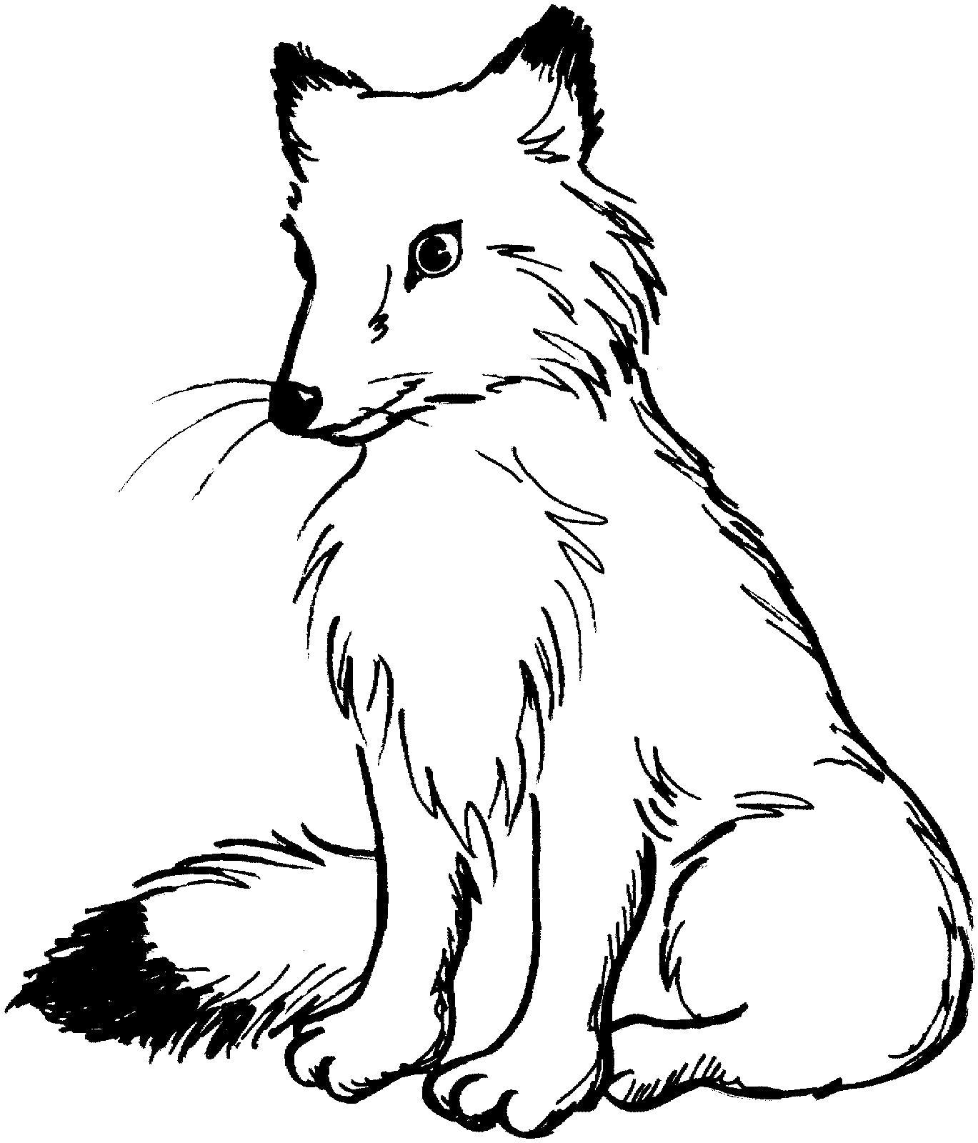 Раскраска красавица лиса . Скачать лиса.  Распечатать Дикие животные