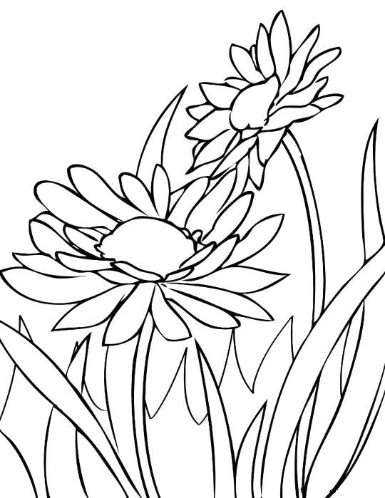 Раскраска красивые картинки цветов. Скачать .  Распечатать