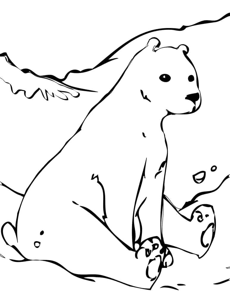 Раскраска полярная медведица сидит на снегу. Скачать медведь.  Распечатать Дикие животные