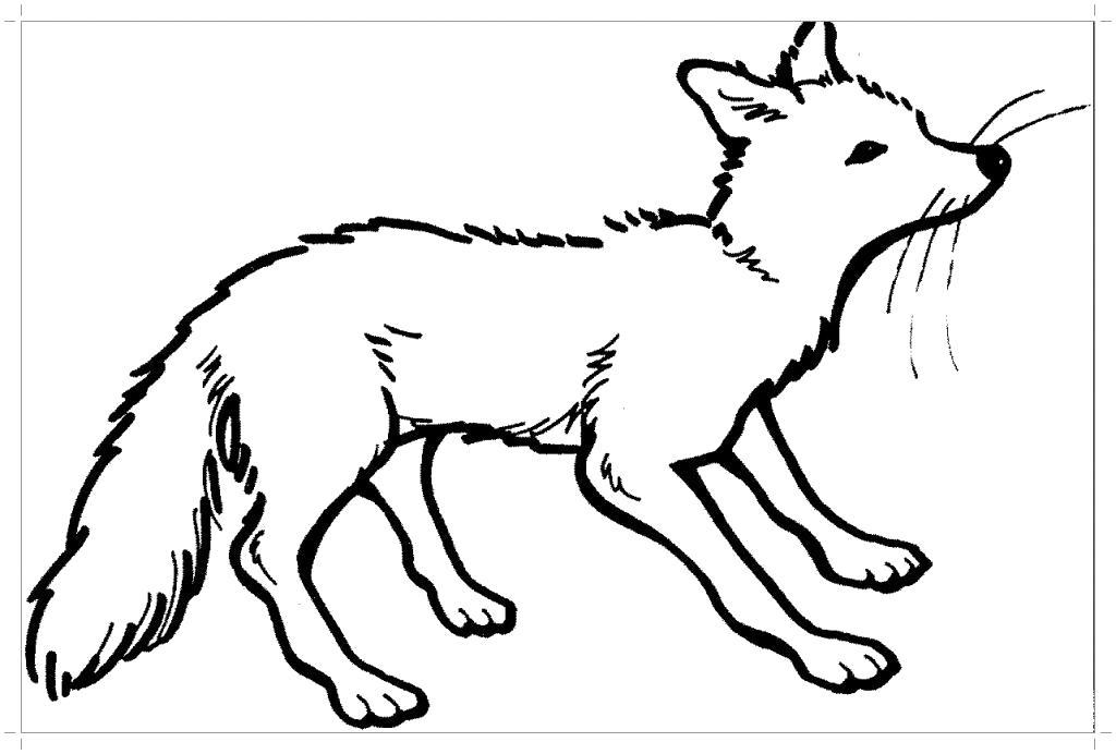 Раскраска  красивая лисица. Скачать лиса.  Распечатать Дикие животные