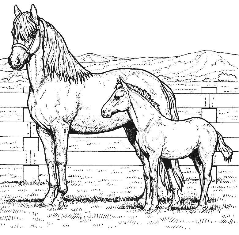 Раскраска Кобыла и жеребенок. Скачать Лошадь.  Распечатать Домашние животные