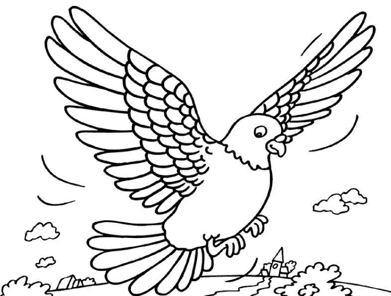Раскраска голубь летит, голубь садится, голубь машет крыльями. Скачать Голубь.  Распечатать Голубь