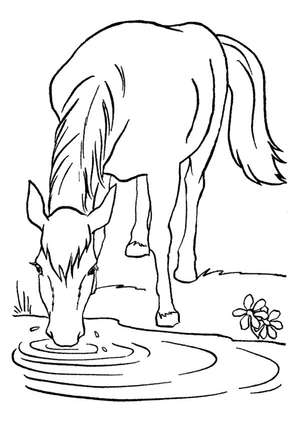 Раскраска корова пьет из лужи. Скачать Лето.  Распечатать Лето