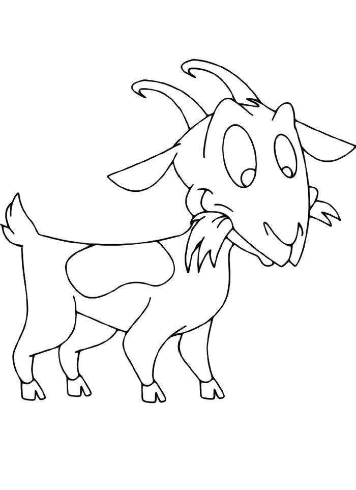Раскраска  Коза жует траву. Скачать Коза.  Распечатать Домашние животные
