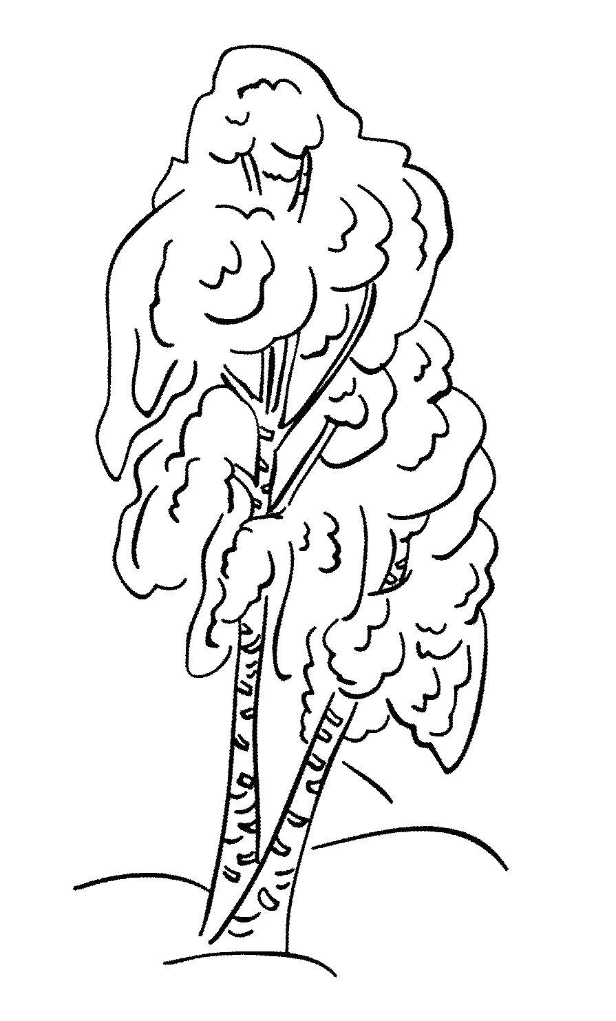 Раскраска  белая береза: зимой, без листьев, . Скачать дерево.  Распечатать растения