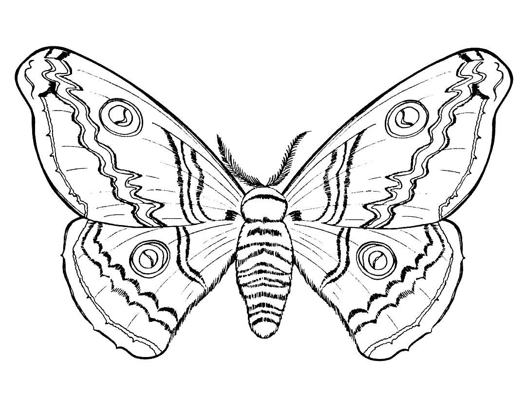 Раскраска  Бабочка.  Павлиний глаз, бабочка, насекомые,  бабочки, картинка бабочки. Скачать Бабочки.  Распечатать Насекомые