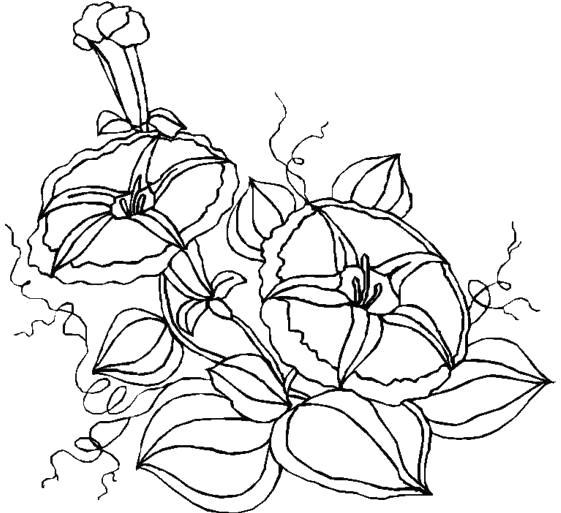 Раскраска контурный рисунок цветка. Скачать Контур.  Распечатать Контур