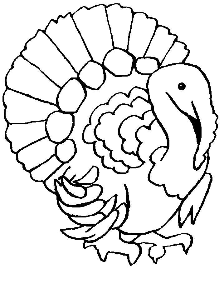 Раскраска  Индюк с большими перьями. Скачать Индюк.  Распечатать Индюк