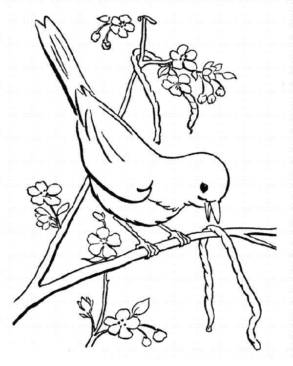Раскраска Птичка принесла червяка. Скачать Весна.  Распечатать Весна