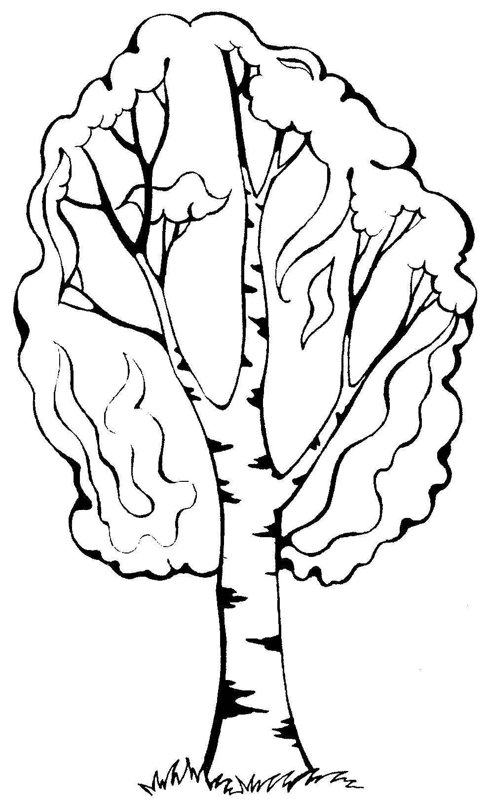 """Раскраска  """"береза дерево зимой"""" скачать и распечатать бесплатно. Скачать дерево.  Распечатать Контуры дервеьев"""