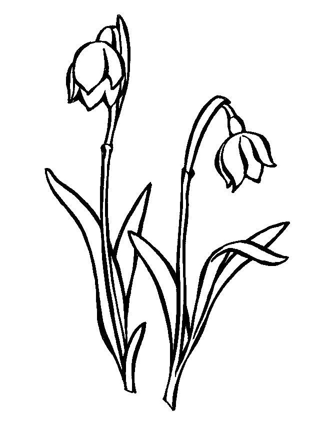 Раскраска цветок колокольчик. Скачать Весна.  Распечатать Весна