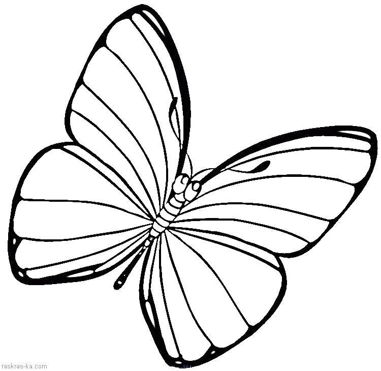 Раскраска Разукраска бабочка. Скачать Бабочки.  Распечатать Бабочки