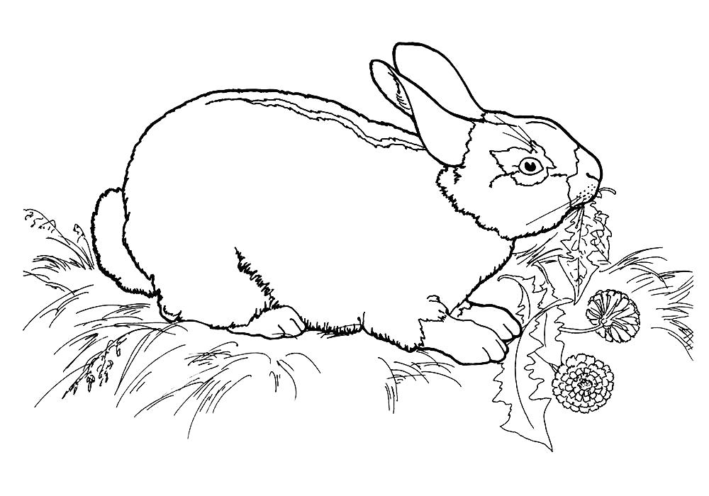 Раскраска  кролика распечатать. Скачать Кролик.  Распечатать Домашние животные