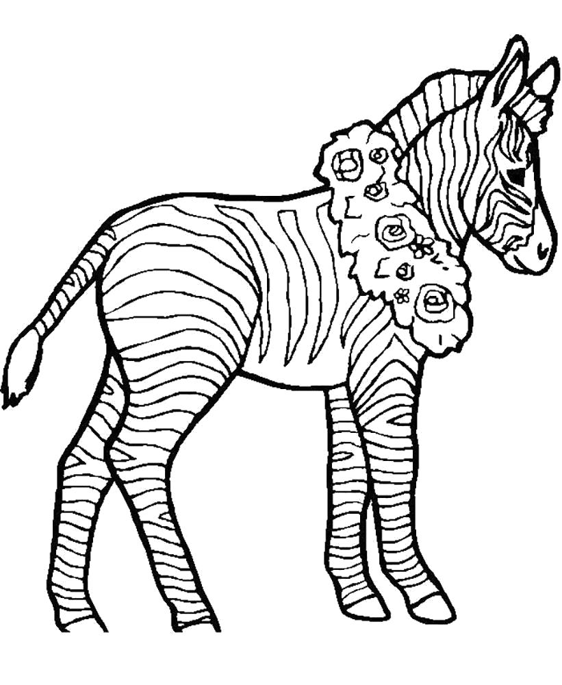 Раскраска  зебра с венком на шее. Скачать зебра.  Распечатать Дикие животные