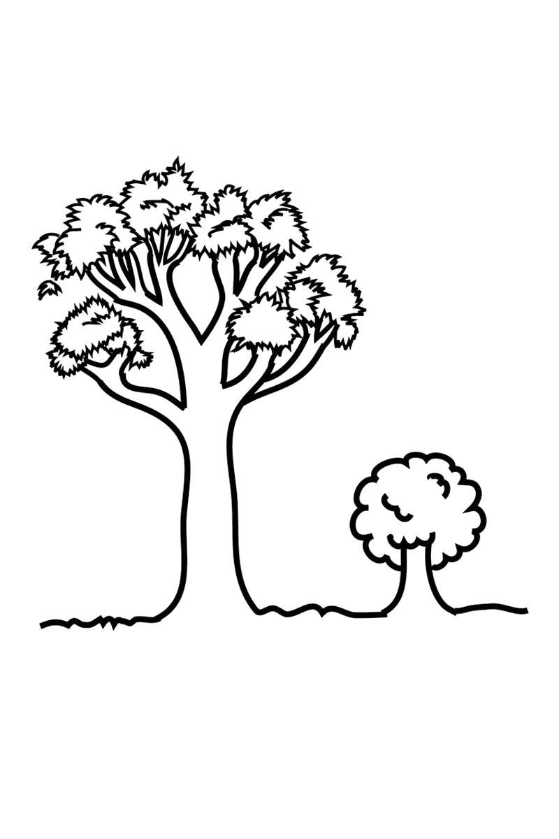 Раскраска Маленькое и большое дерево. Скачать деревья.  Распечатать деревья