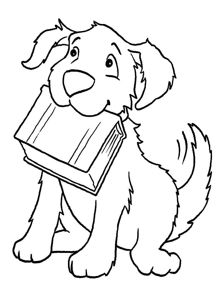 Раскраска Принёс книжку. Скачать Собаки.  Распечатать Собаки
