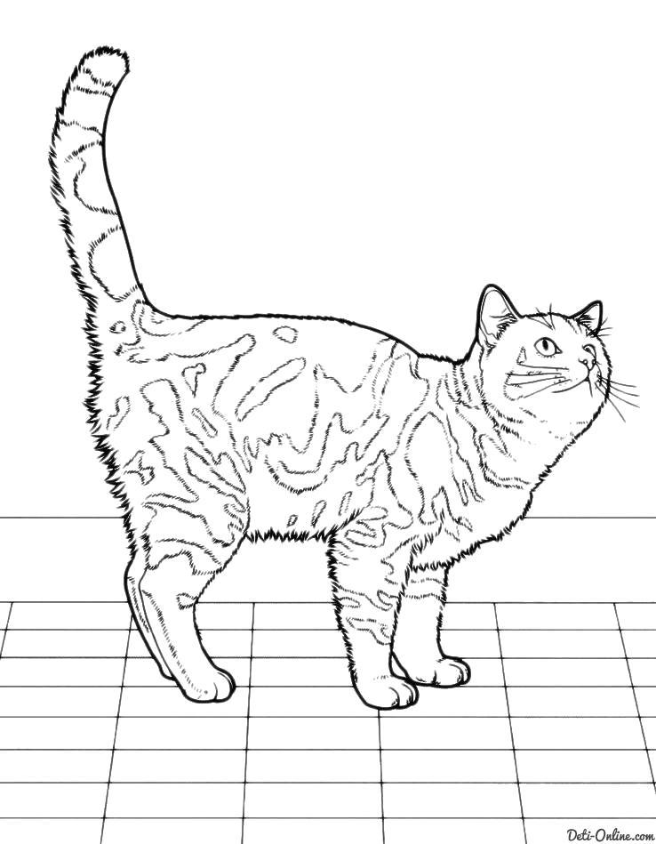 Раскраска  Кошка на кухне ждет обеда. Скачать кот.  Распечатать кот