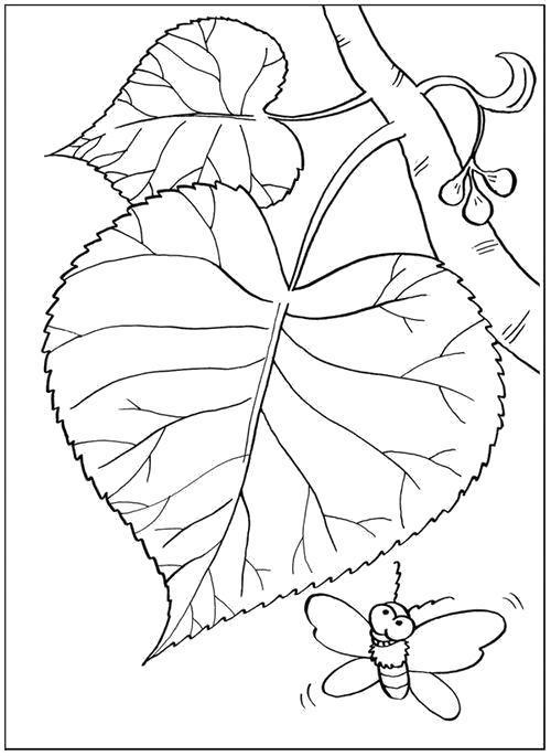 Раскраска  Листья и бабочка. Скачать листья.  Распечатать листья