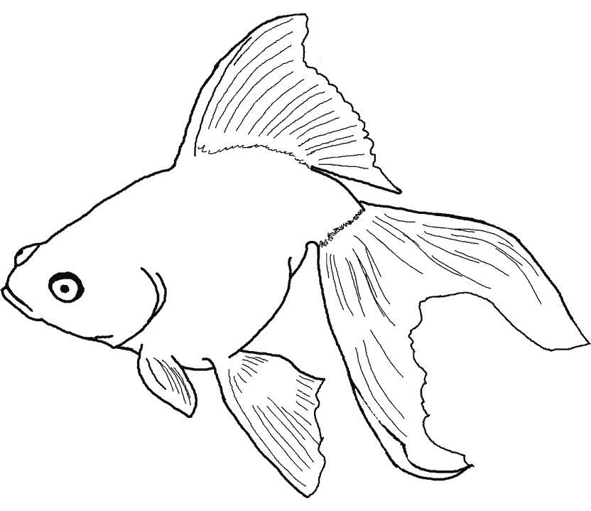 Раскраска Золотая рыбка плавает в воде. Скачать золотая рыбка.  Распечатать золотая рыбка