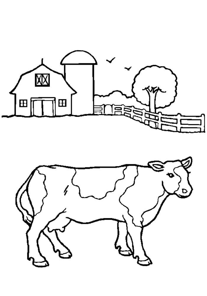Раскраска Корова картинка . Скачать Корова.  Распечатать Домашние животные
