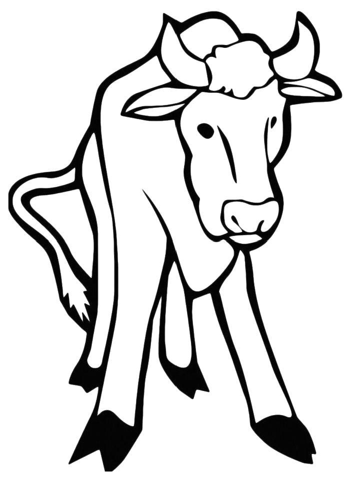 Раскраска  Стоящая корова. Скачать Корова.  Распечатать Домашние животные