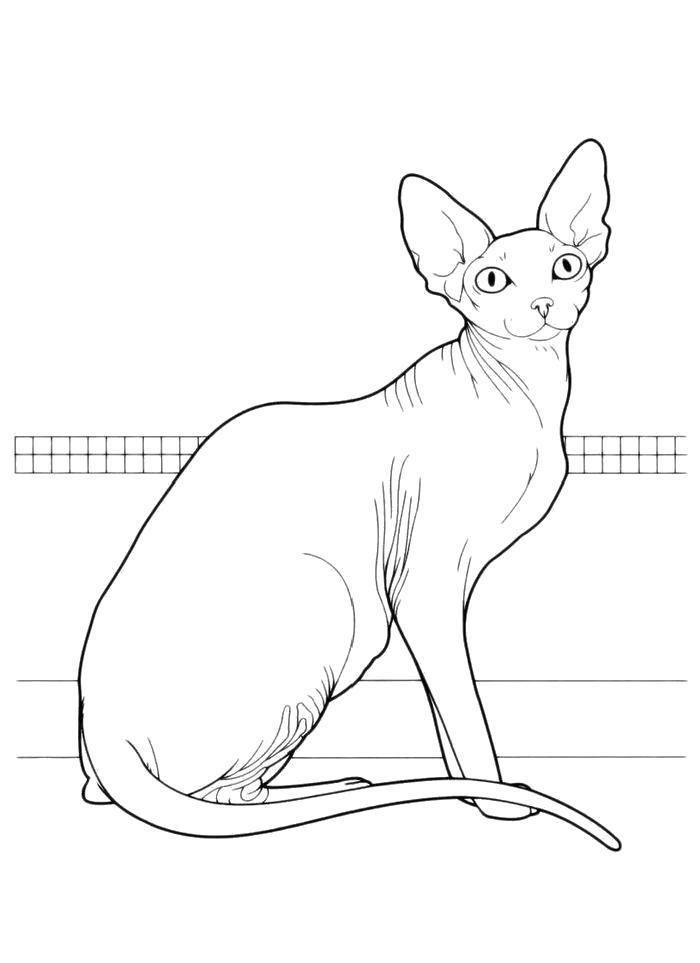 Раскраска  Ушастая кошка. Скачать кошка.  Распечатать кошка
