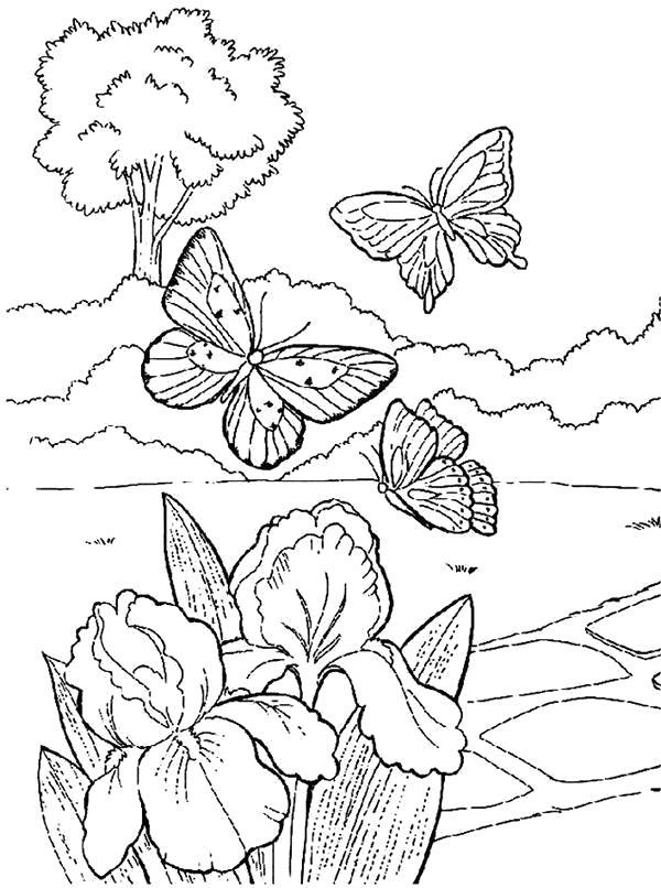 Раскраска Танец бабочек. Скачать Весна.  Распечатать Весна