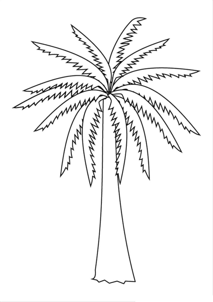 Раскраска  Деревья без листьев пальма. Скачать дерево.  Распечатать растения