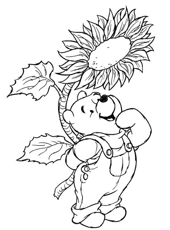 Раскраска медвежонок и подсолнух. Скачать подсолнух.  Распечатать подсолнух