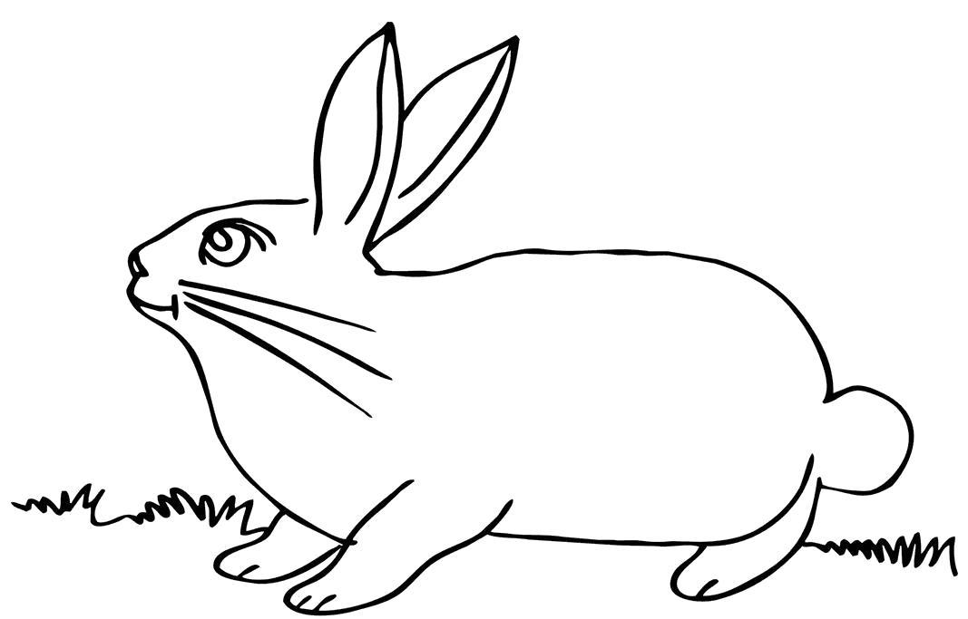 Раскраска большой заяц. Скачать Заяц.  Распечатать Домашние животные
