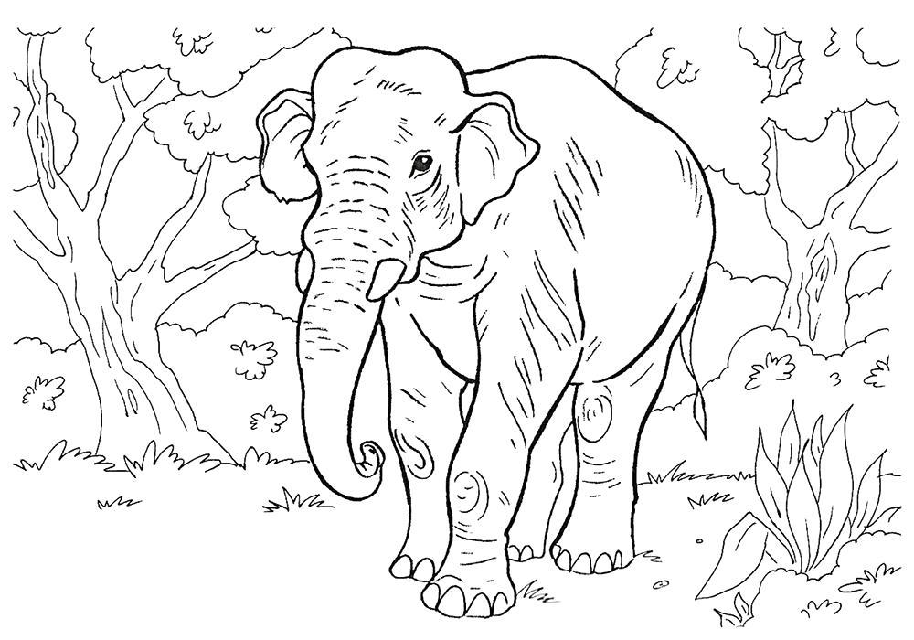 Раскраска Слон картинка . Скачать слон.  Распечатать Дикие животные
