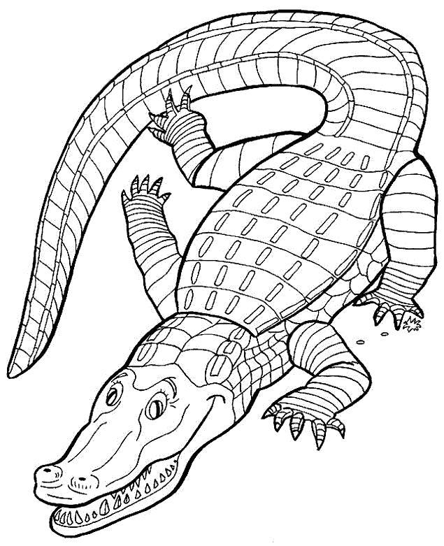 Раскраска Зеленый крокодил. Скачать крокодил.  Распечатать Дикие животные