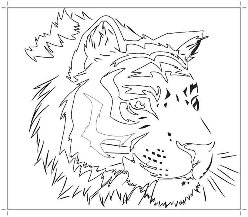 Раскраска Тигр  . Скачать Тигр.  Распечатать Дикие животные