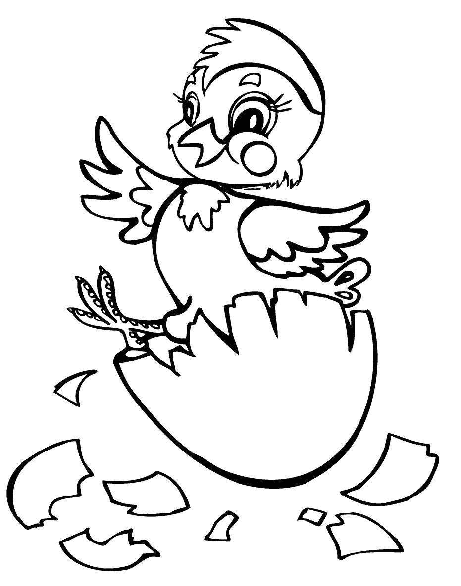 Раскраска Цыпленок вылупился. Скачать Цыпленок.  Распечатать Цыпленок