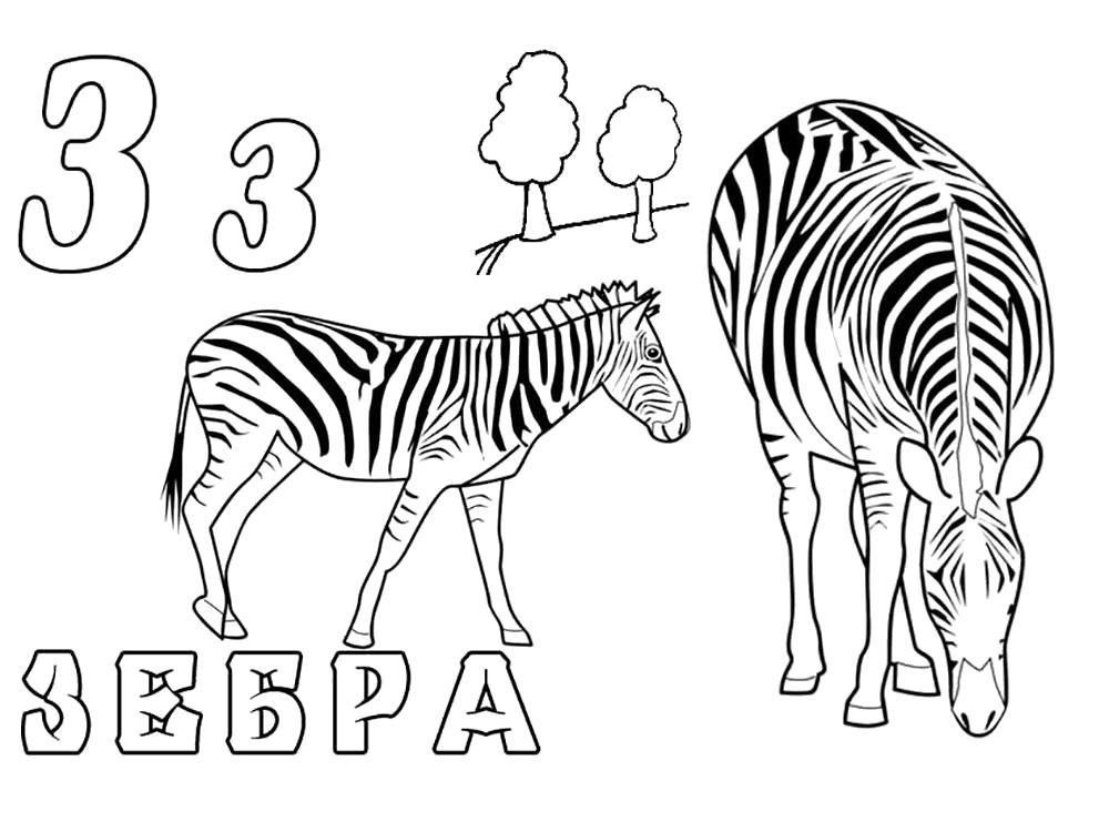 Раскраска  зебра. Буква з. Алфавит.. Скачать зебра.  Распечатать Дикие животные