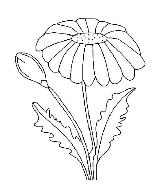 Раскраска шаблон цветочка роипашки. Скачать цветы.  Распечатать растения