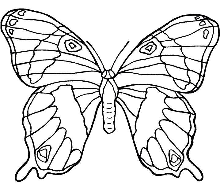 Раскраска Насекомые  бабочки скачать бесплатно  распечатать. Скачать Бабочки.  Распечатать Насекомые