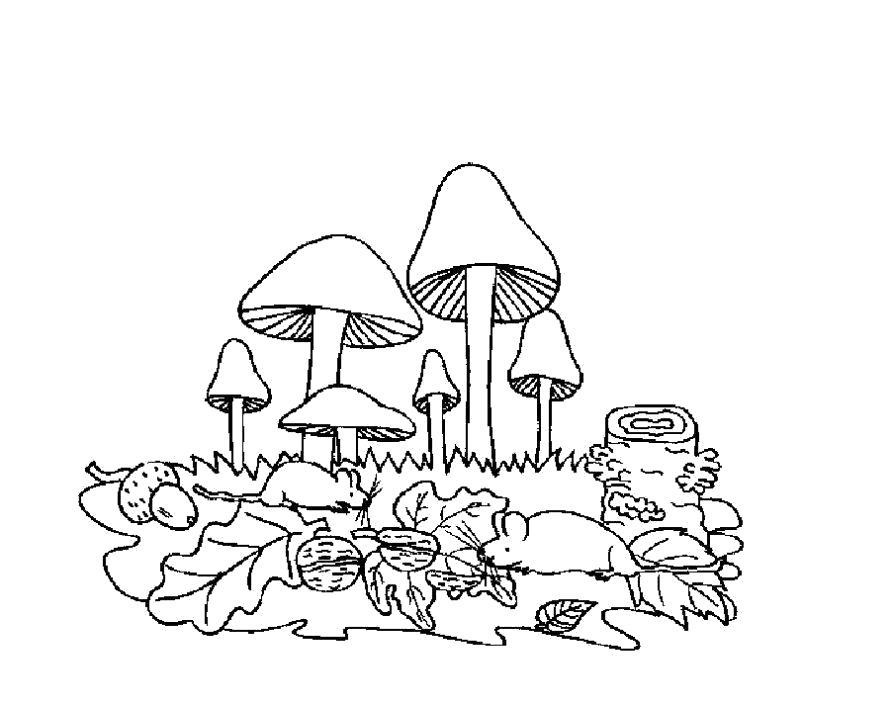 Раскраска Разукрашка грибы для детей. Скачать гриб.  Распечатать растения